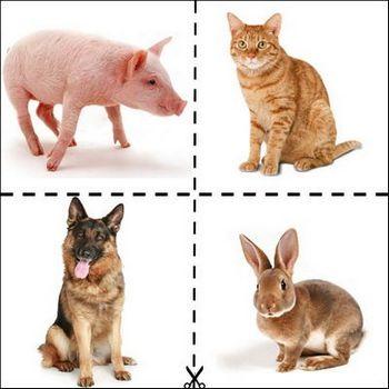картинки для дітей тварини