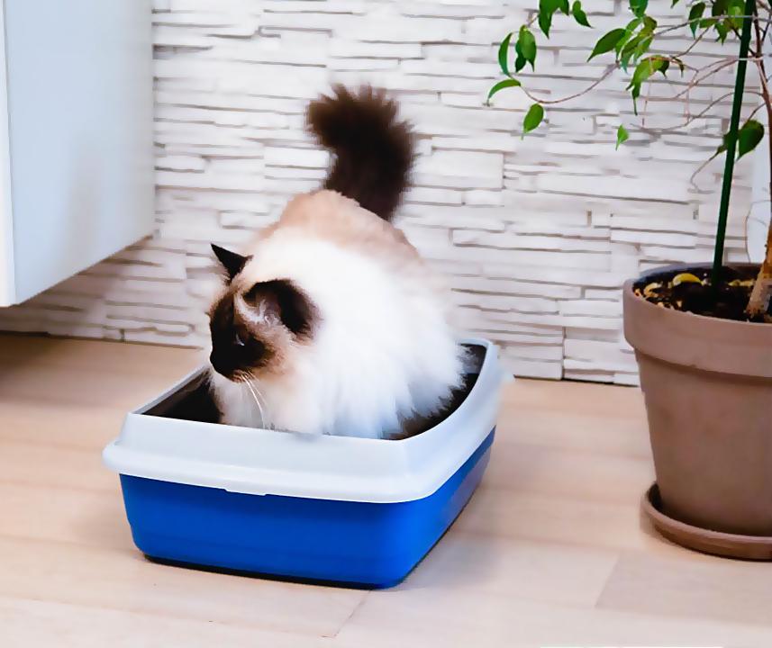 Открытый туалет Ferplast для кошек