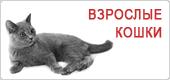 Сухой корм для взрослых кошек Роял Канин • Royal Canin