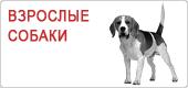 Сухой корм для взрослых собак Роял Канин • Royal Canin