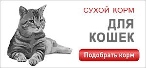 Сухой корм для кошек и котят Роял Канин • Royal Canin