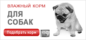 Влажный корм / консервы для собак Роял Канин • Royal Canin