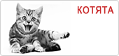 Корм для котят Роял Канин • Royal Canin