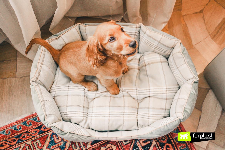 Мягкие места для собак и щенков • Диваны для собак