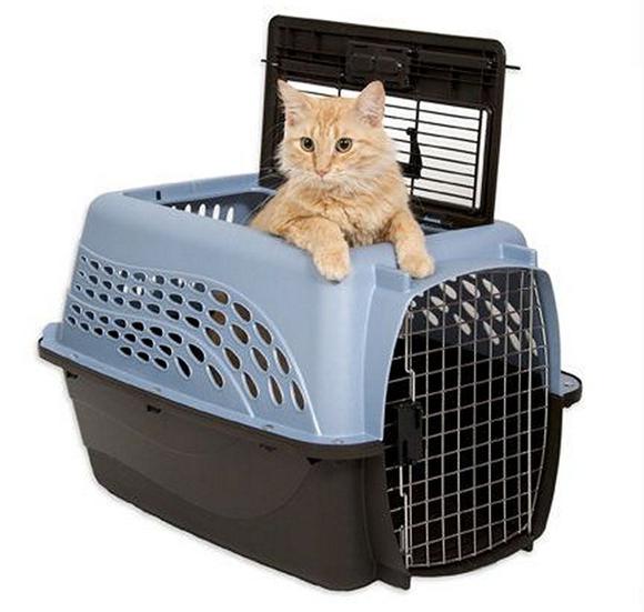Перевозка котят – ответственное дело