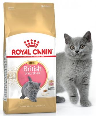 Корм для котят породы Британская короткошерстная Royal Canin ...